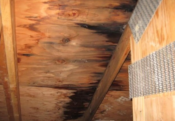 attic-mold-caused-by-leaking-roof