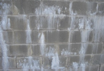 efflorescence-vs-mold