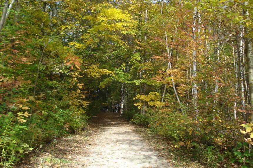 Fall-hike-trail