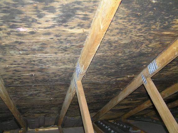 mold-growth-underside-roof-deck